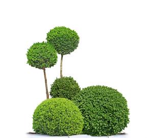 Arbuste jardinnage